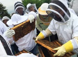 Beekeeping Groups