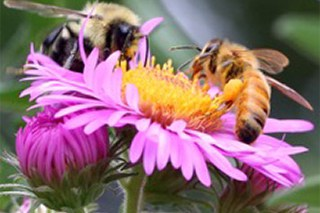 bees on pink flower