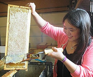 woman working with bee hive